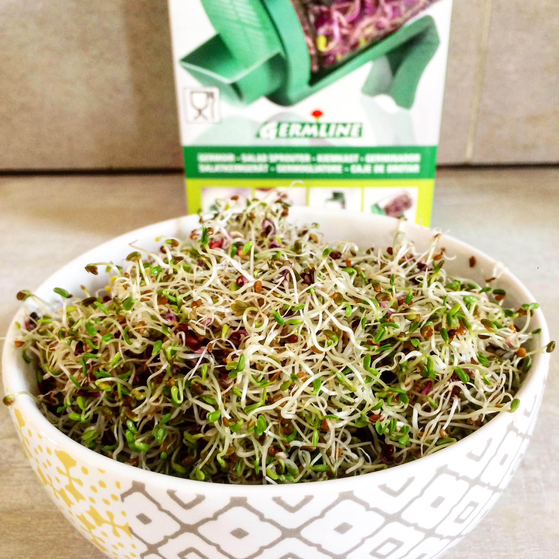 Ingrédients healthy : quels sont les bienfaits des graines germées ?