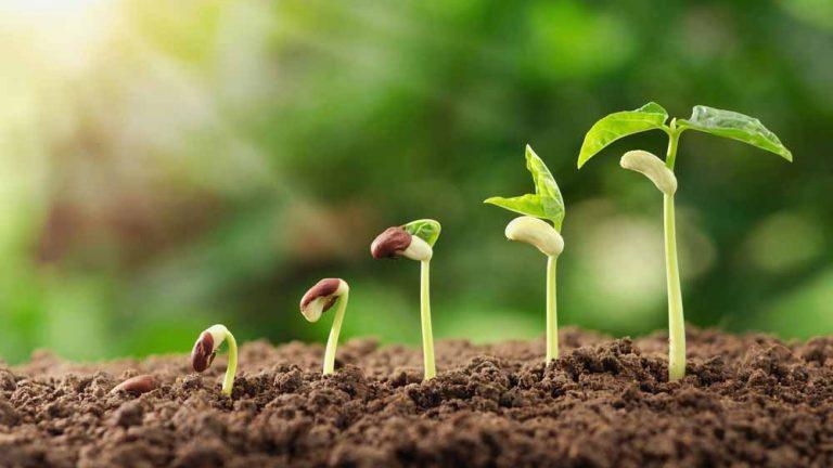Faire germer ses graines soi-même : mode d'emploi