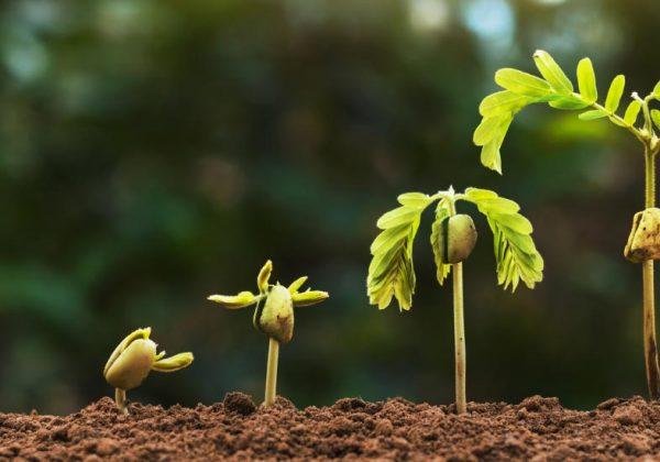 Comment faire germer des graines d'arbres ?