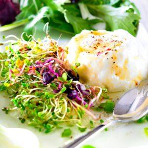 Salades graines